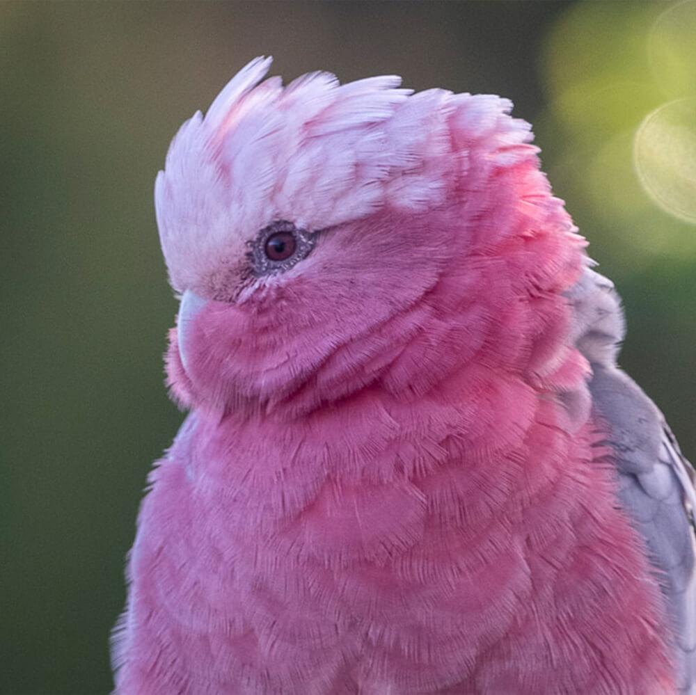 beechmont-la-dolce-vita-b&b-birdwatching